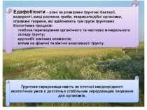 Едафобіонти – різні за розмірами ґрунтові бактерії, водорості, вищі рослини, ...