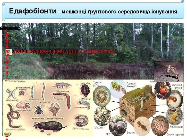 Едафобіонти – мешканці ґрунтового середовища існування