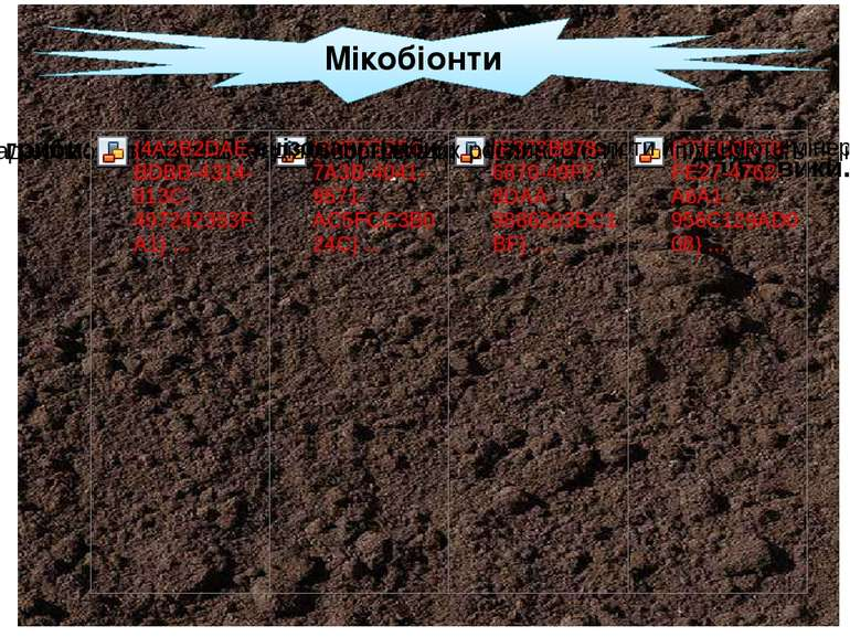 Мікобіонти