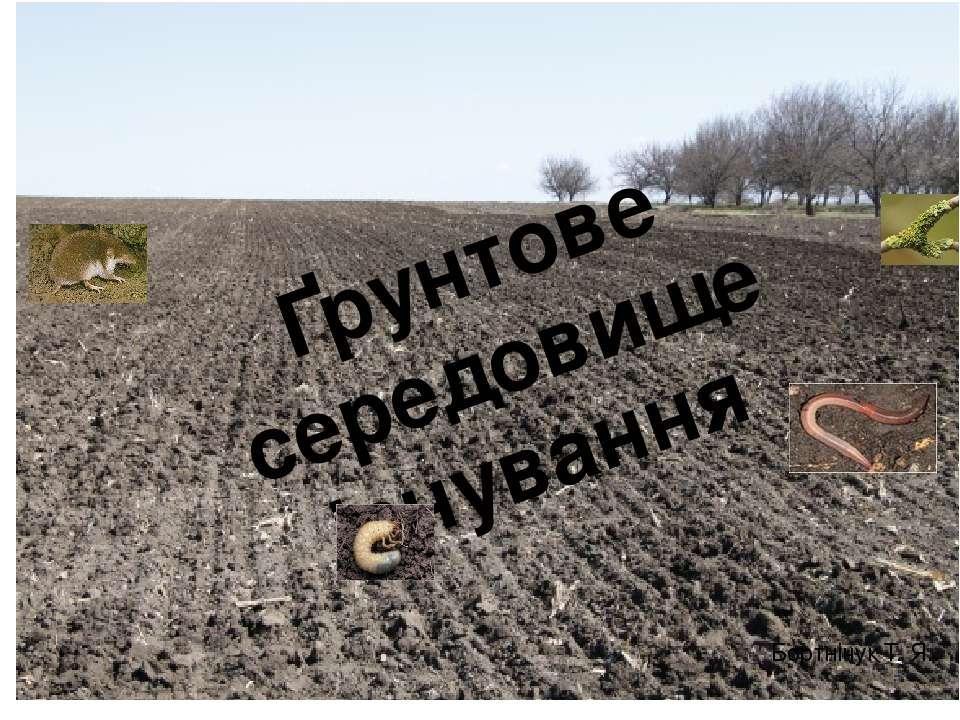 Ґрунтове середовище існування Бортнічук Т. Я.