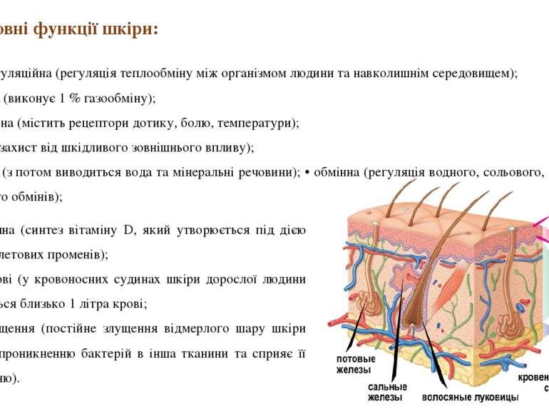 • синтетична (синтез вітаміну D, який утворюється під дією ультрафіолетових п...