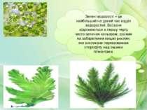 Зелені водорості – це найбільший на даний час відділ водоростей. Всі вони від...