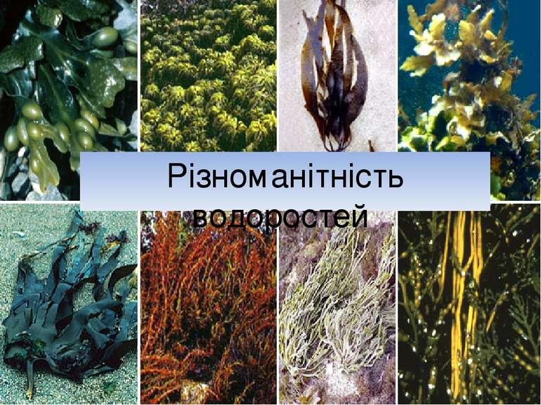 Різноманітність водоростей