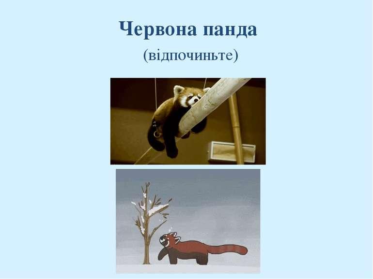 Червона панда (відпочиньте)