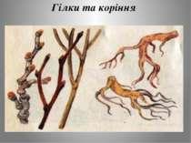 Гілки та коріння