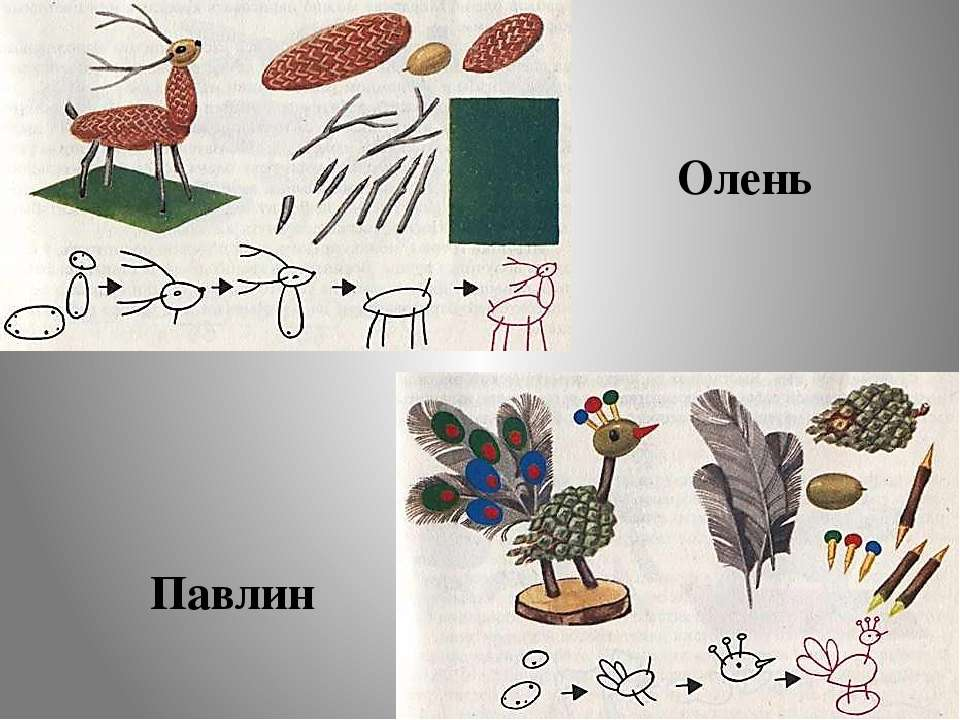 Олень Павлин