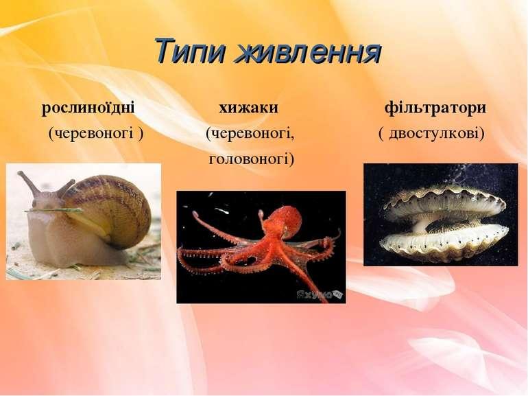 рослиноїдні хижаки фільтратори (черевоногі ) (черевоногі, ( двостулкові) голо...