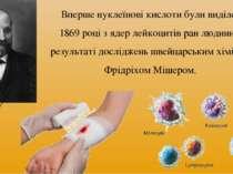 Вперше нуклеїнові кислоти були виділені у 1869 році з ядер лейкоцитів ран люд...