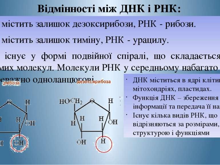 Відмінності між ДНК і РНК: ДНК містить залишок дезоксирибози, РНК - рибози. Д...