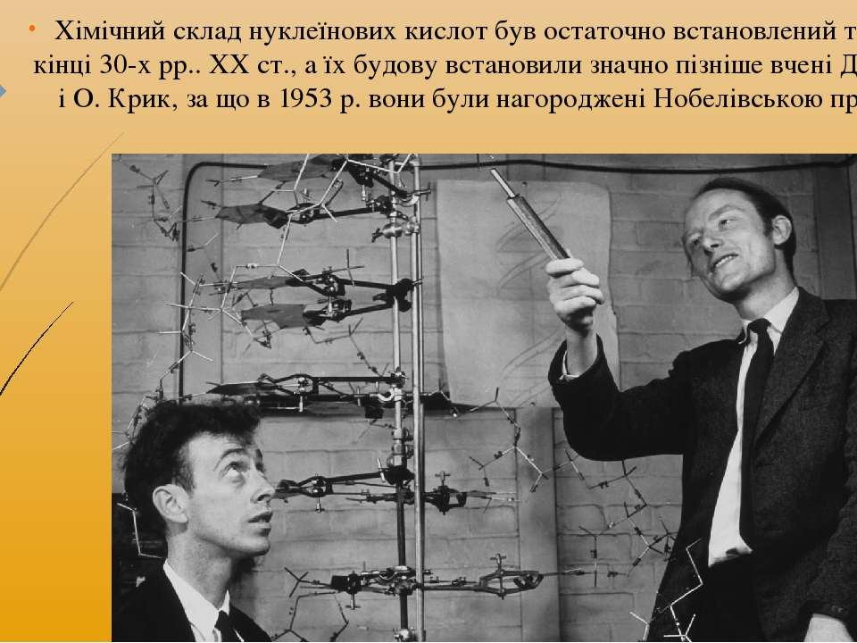 Хімічний склад нуклеїнових кислот був остаточно встановлений тільки в кінці 3...