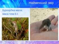 Найменший звір Бурозубка мала: маса тіла-5 г.