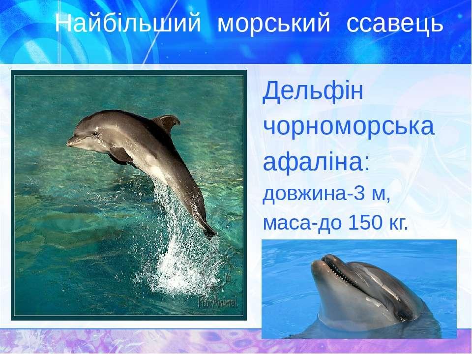 Найбільший морський ссавець Дельфін чорноморська афаліна: довжина-3 м, маса-д...