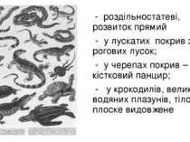 - роздільностатеві, розвиток прямий - у лускатих покрив з рогових лусок; - у ...