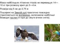 Маса найбільших літаючих птахів не перевищує 14—16кг при розмахукрилдо 3—4...