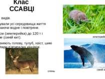 Клас ССАВЦІ 5 тис. видів. Опанували усі середовища життя включаючи водне і по...