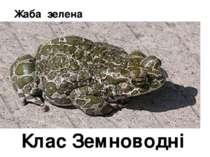 Жаба зелена Клас Земноводні