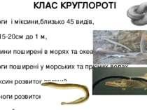 КЛАС КРУГЛОРОТІ Міноги і міксини,близько 45 видів, Від 15-20см до 1 м, Міксин...
