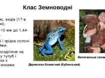 Клас Земноводні 3-4 тис. видів (17-в Україні). Від 8-10 мм до 1,44-1,8м. Прі...