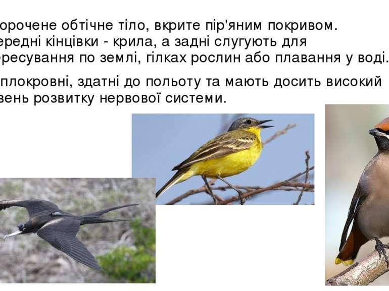 укорочене обтічне тіло, вкрите пір'яним покривом. Передні кінцівки - крила, а...