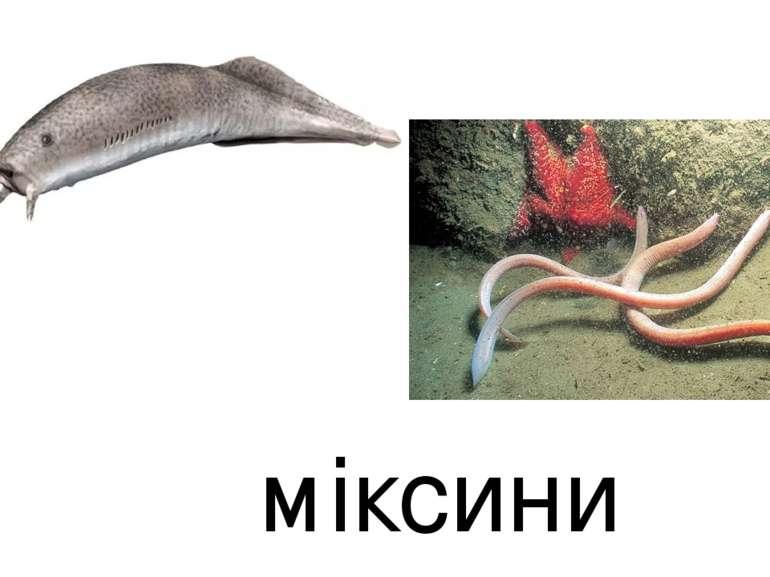 міксини