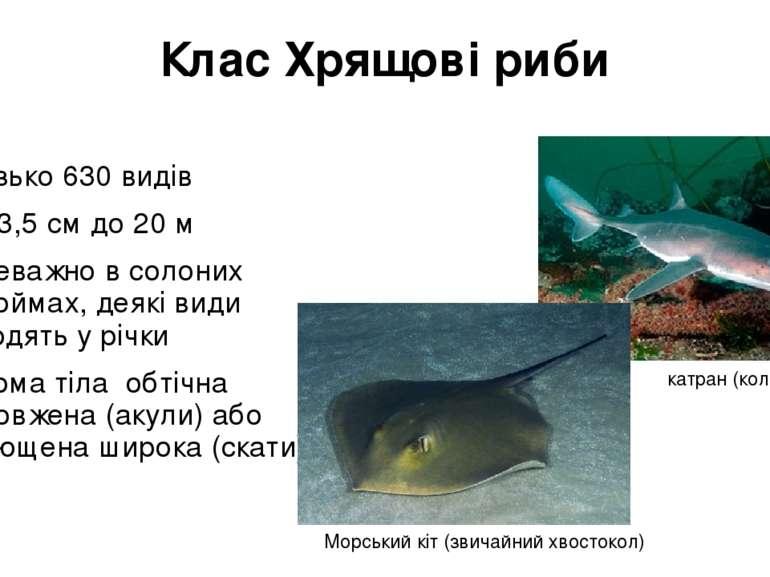 Клас Хрящові риби близько 630 видів Від 3,5 см до 20 м переважно в солоних во...