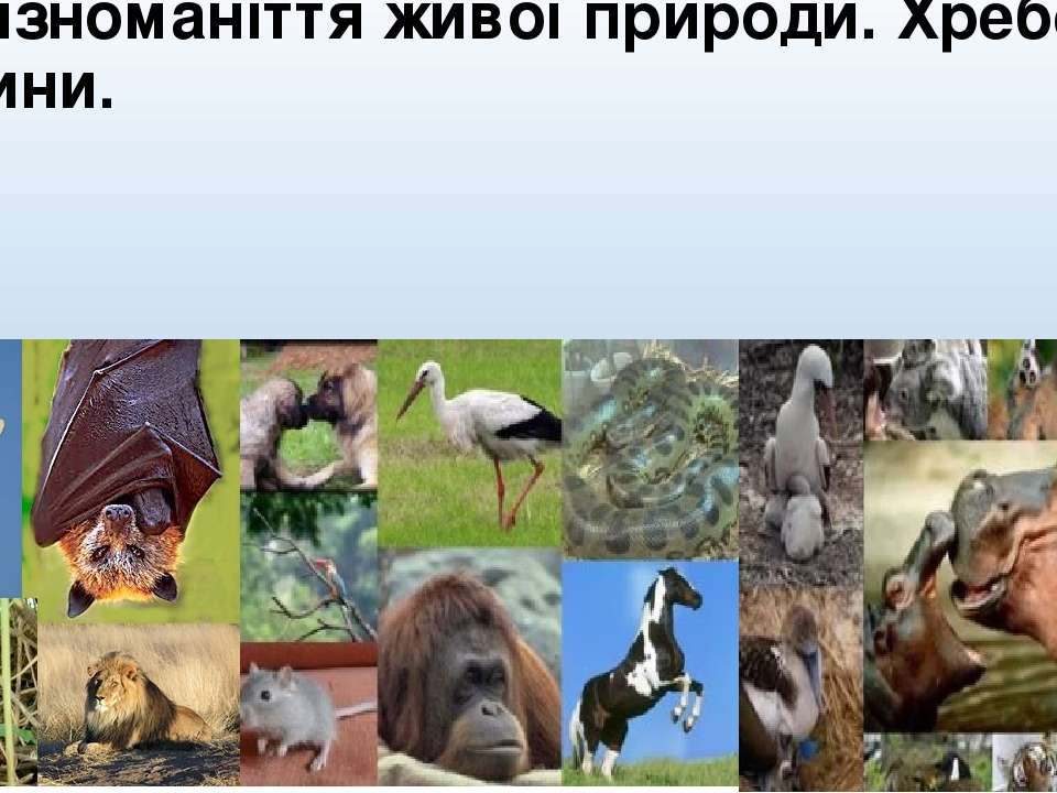 Біорізноманіття живої природи. Хребетні тварини.