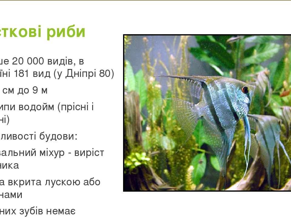 Кісткові риби Більше 20 000 видів, в Україні 181 вид (у Дніпрі 80) Від 6 см д...