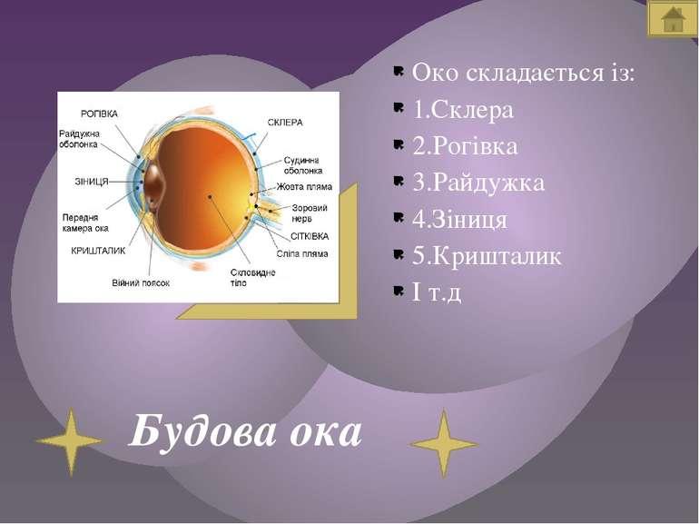 Будова ока Око складається із: 1.Склера 2.Рогівка 3.Райдужка 4.Зіниця 5.Кришт...
