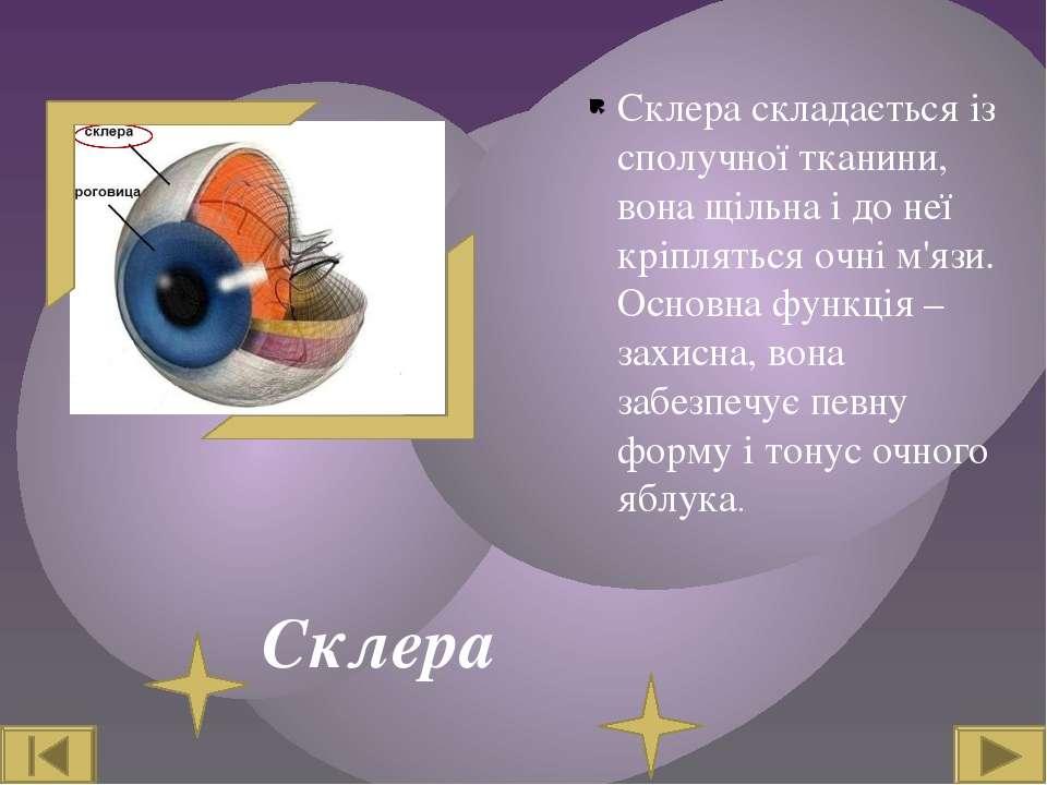 Склера Склера складається із сполучної тканини, вона щільна і до неї кріплять...