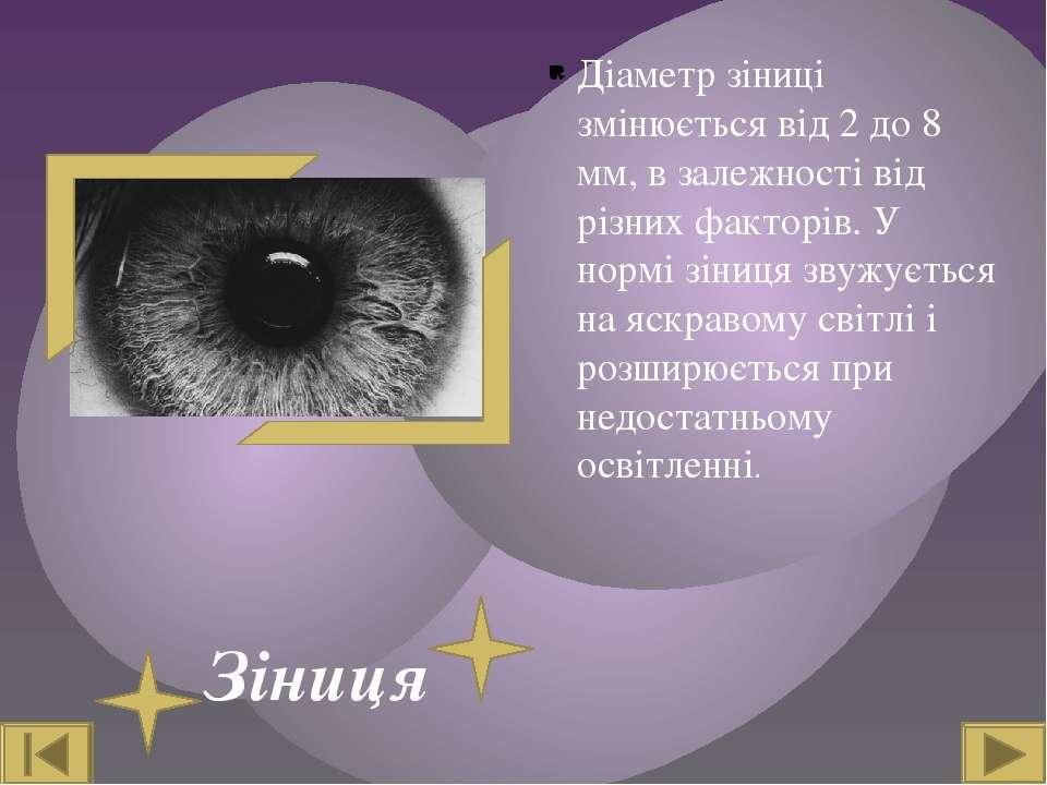Зіниця Діаметр зіниці змінюється від 2 до 8 мм, в залежності від різних факто...