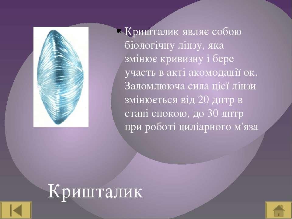 Кришталик Кришталик являє собою біологічну лінзу, яка змінює кривизну і бере ...