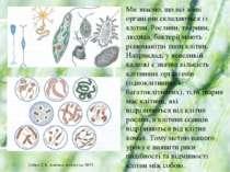 Ми знаємо, що всі живі організми складаються із клітин. Рослини, тварини, люд...