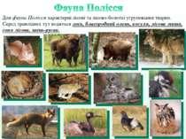 Для фауни Полісся характерні лісові та лісово-болотні угруповання тварин. Сер...