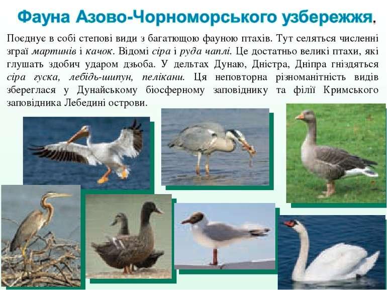 Поєднує в собі степові види з багатющою фауною птахів. Тут селяться численні ...