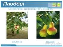 Плодові Це рослини, що вирощують в садах. яблуня груша www.themegallery.com