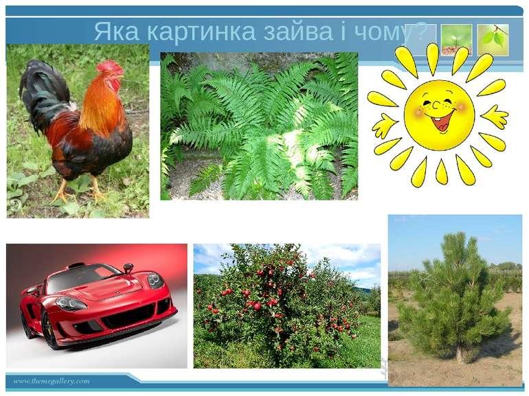 Яка картинка зайва і чому? www.themegallery.com