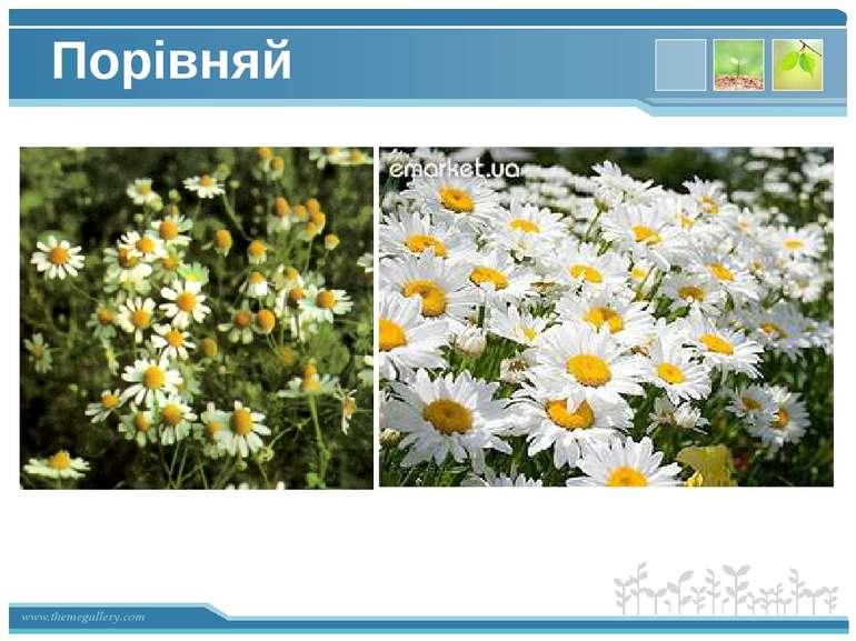 Порівняй www.themegallery.com