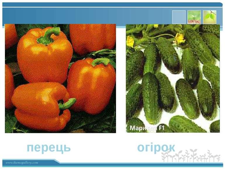 перець огірок www.themegallery.com