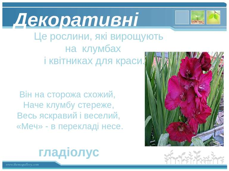 Декоративні Це рослини, які вирощують на клумбах і квітниках для краси. Він н...