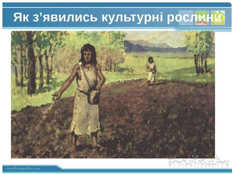 Як з'явились культурні рослини www.themegallery.com