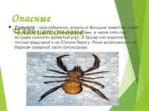 Опасные Членистоногие Сольпуга - паукообразное, довольно большое животное, се...