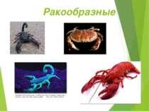 Ракообразные