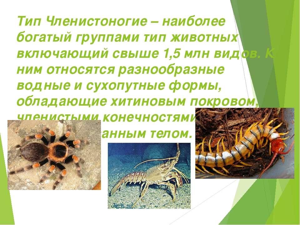 Тип Членистоногие – наиболее богатый группами тип животных включающий свыше 1...