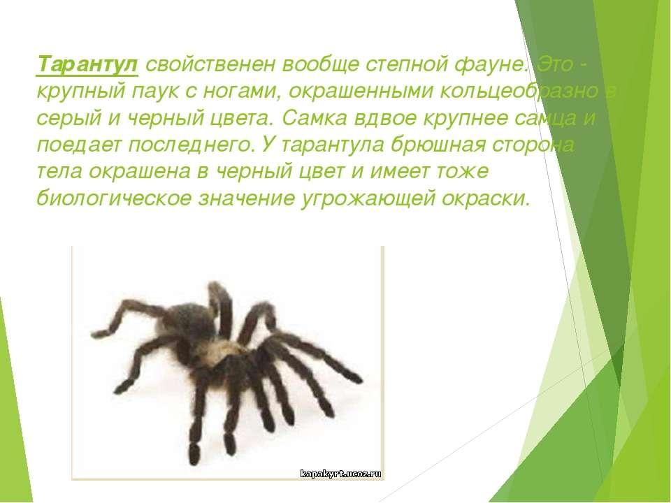 Тарантул свойственен вообще степной фауне. Это - крупный паук с ногами, окраш...
