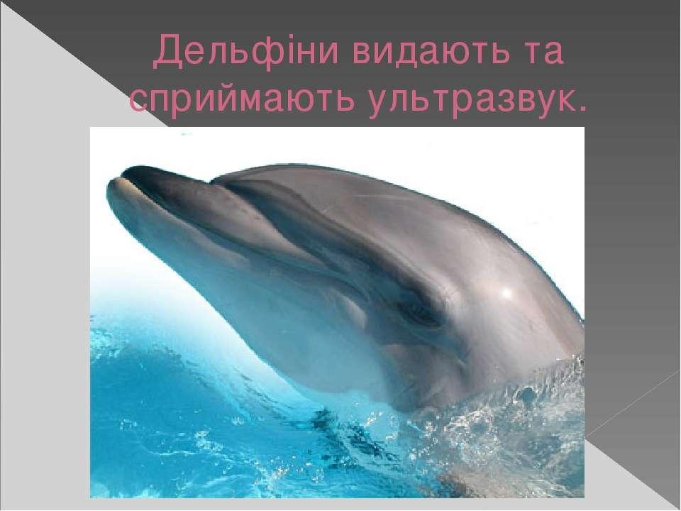 Дельфіни видають та сприймають ультразвук.