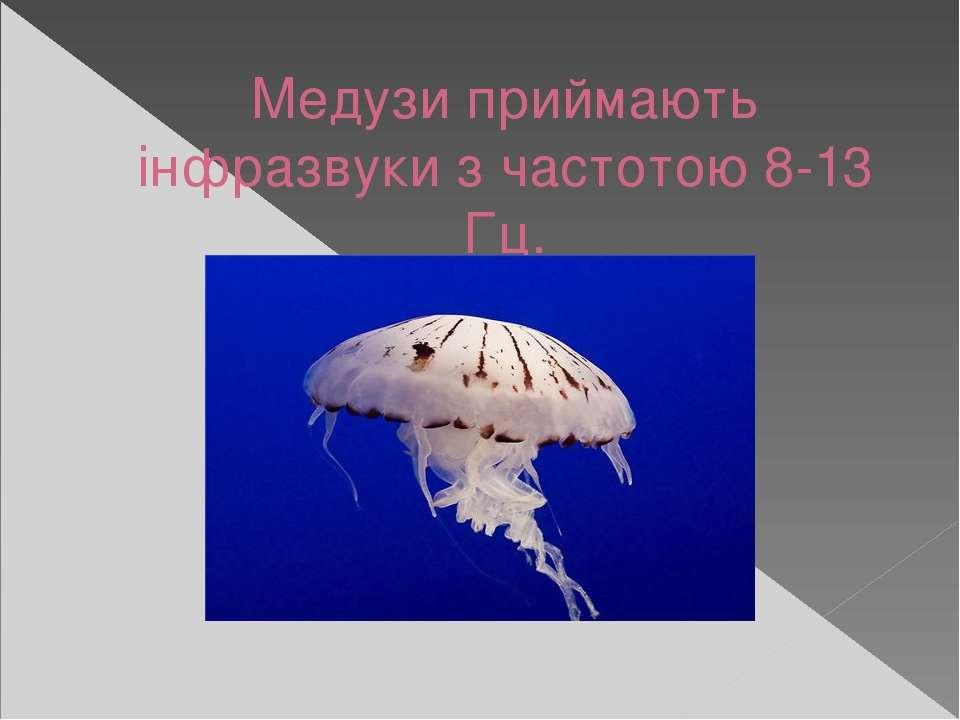 Медузи приймають інфразвуки з частотою 8-13 Гц.