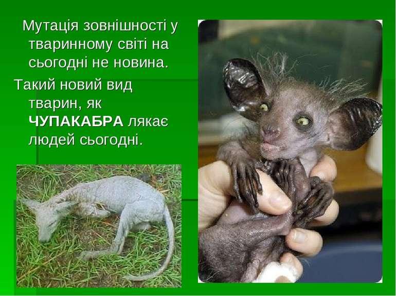 Мутація зовнішності у тваринному світі на сьогодні не новина. Такий новий вид...