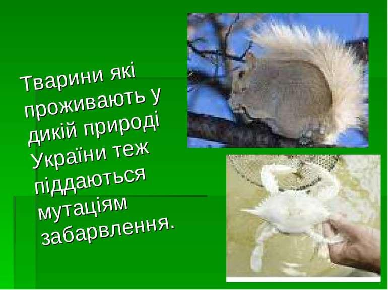 Тварини які проживають у дикій природі України теж піддаються мутаціям забарв...