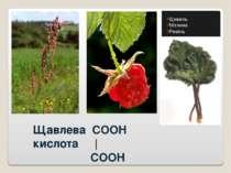 Щавлева COOH кислота | COOH Щавель Малина Ревінь