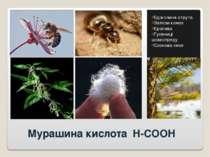 Мурашина кислота H-COOH Бджолина отрута Залози комах Кропива Гусениці шовкопр...
